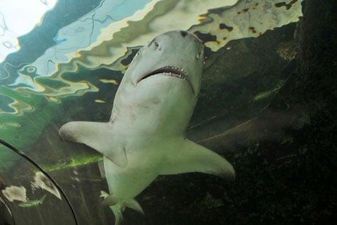 Sydney Aquarium, Australia