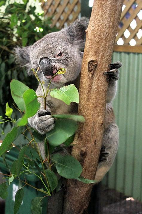 Featherdale Wildlife Park, Sydney, Australia | Sushi Bytes ...