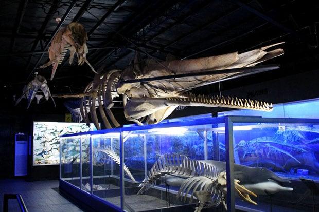 D' Bone Collector Museum, Davao City