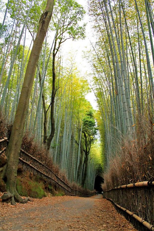 Arashiyama Bamboo Groves A Stroll Through Another World