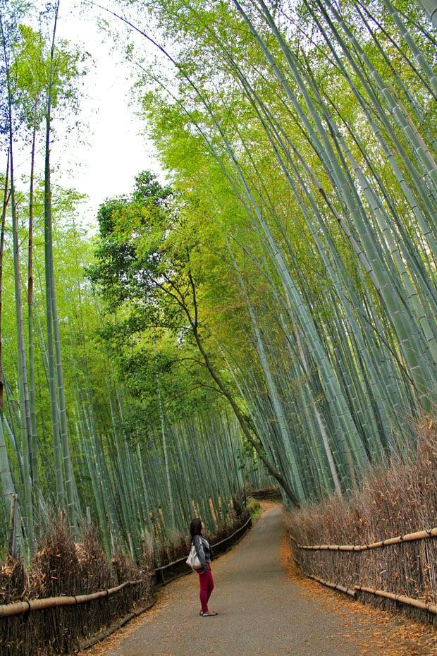 Arashiyama Bamboo Groves