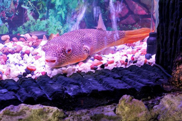 Las Farolas: The Fish World, Frontera Verde, Pasig