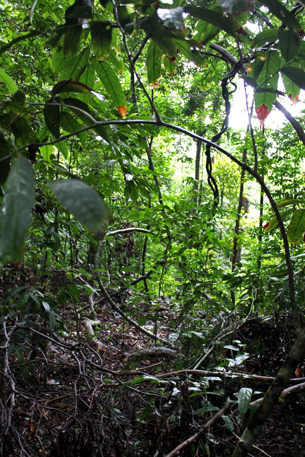 Dev's Adventure Tours:  Nature Cycling, Jungle Trekking, & Mangrove Kayaking in Langkawi, Malaysia