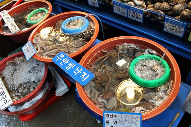 Braving Sannakji at Noryangjin Fish Market, Seoul, South Korea