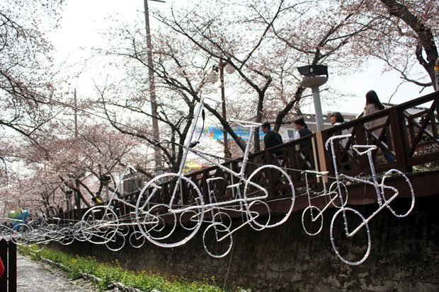 Spend the Day in Jinhae, Home of South Korea's Biggest Cherry Blossom Festival!