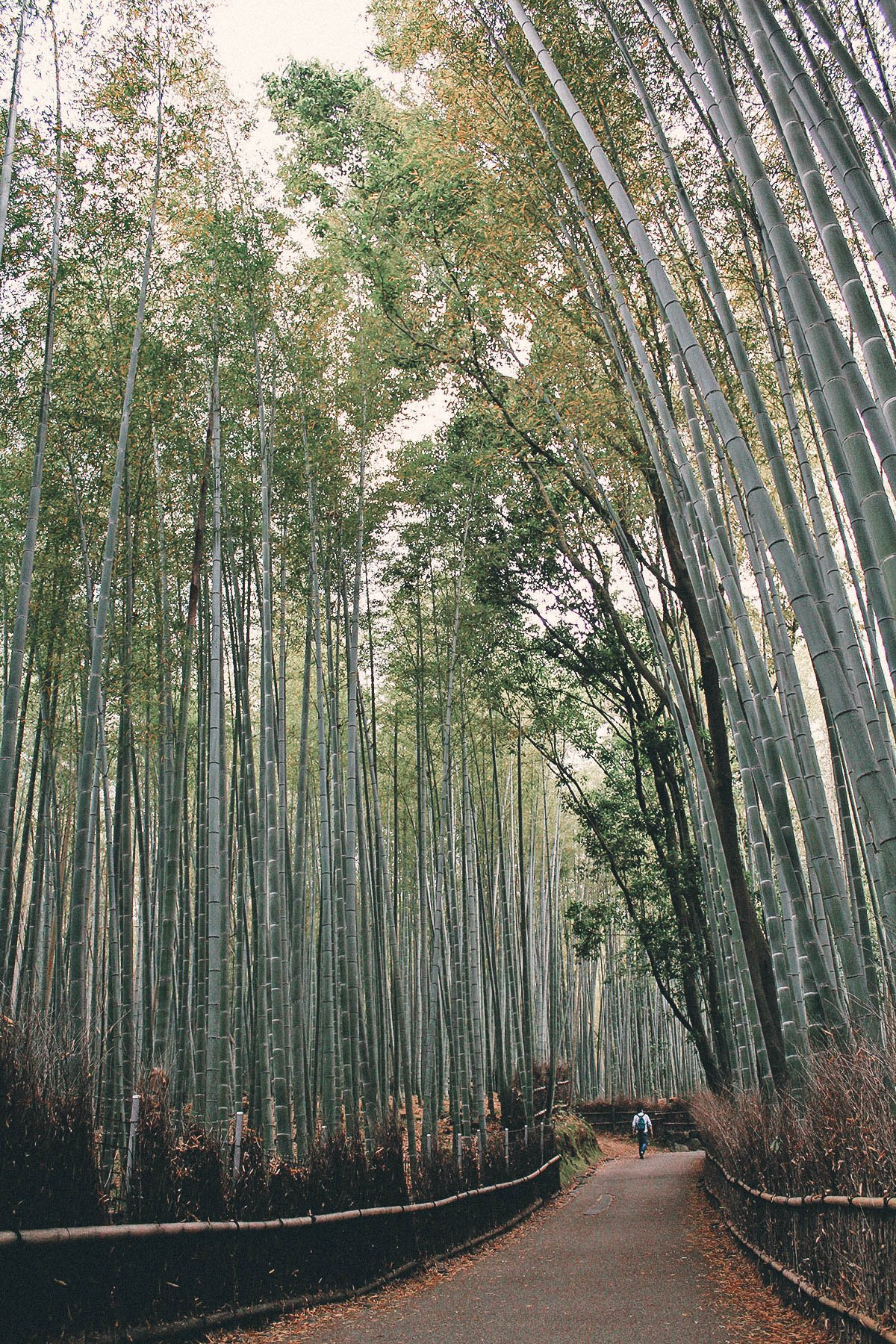 Arashiyama Bamboo Groves, Kyoto, Japan