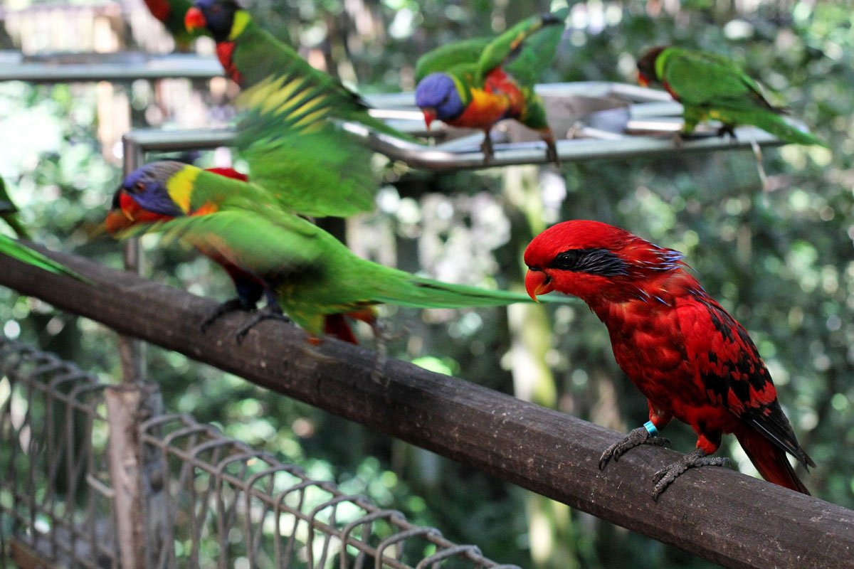 Go Birding at Jurong Bird Park in Singapore