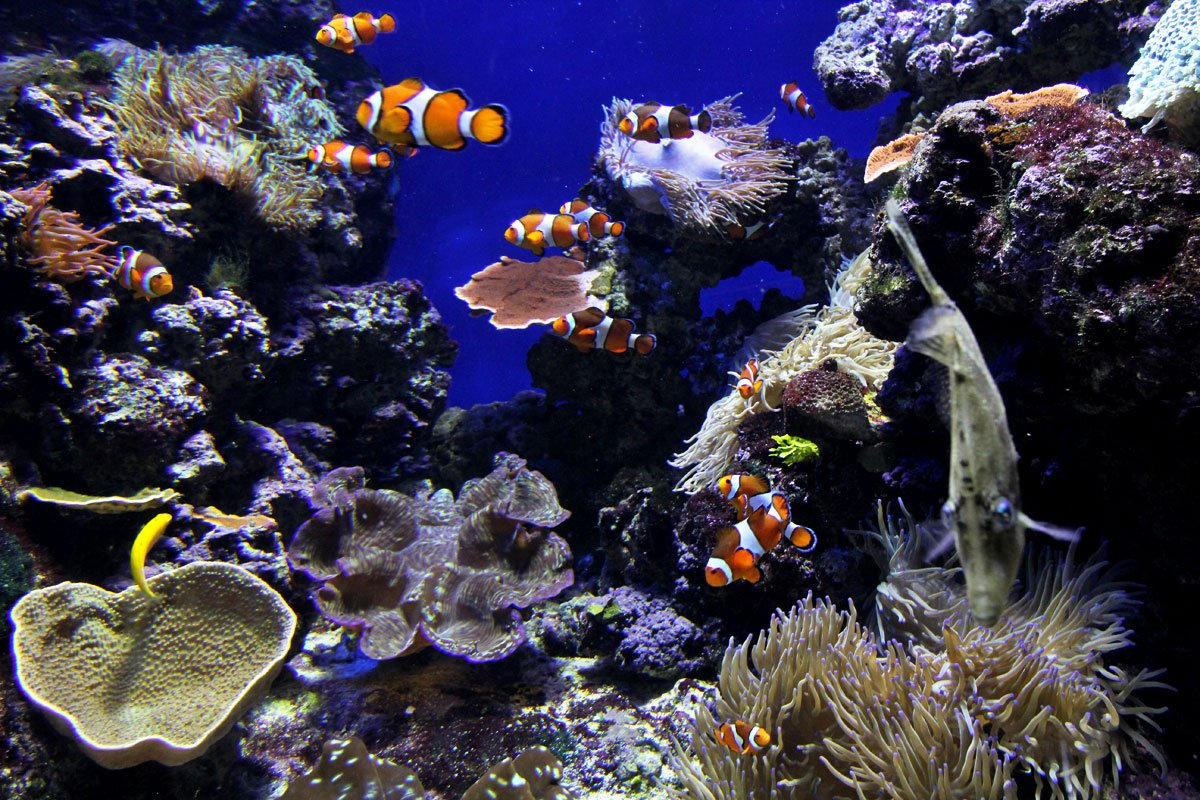 S.E.A. Aquarium, Resorts World Sentosa, Singapore