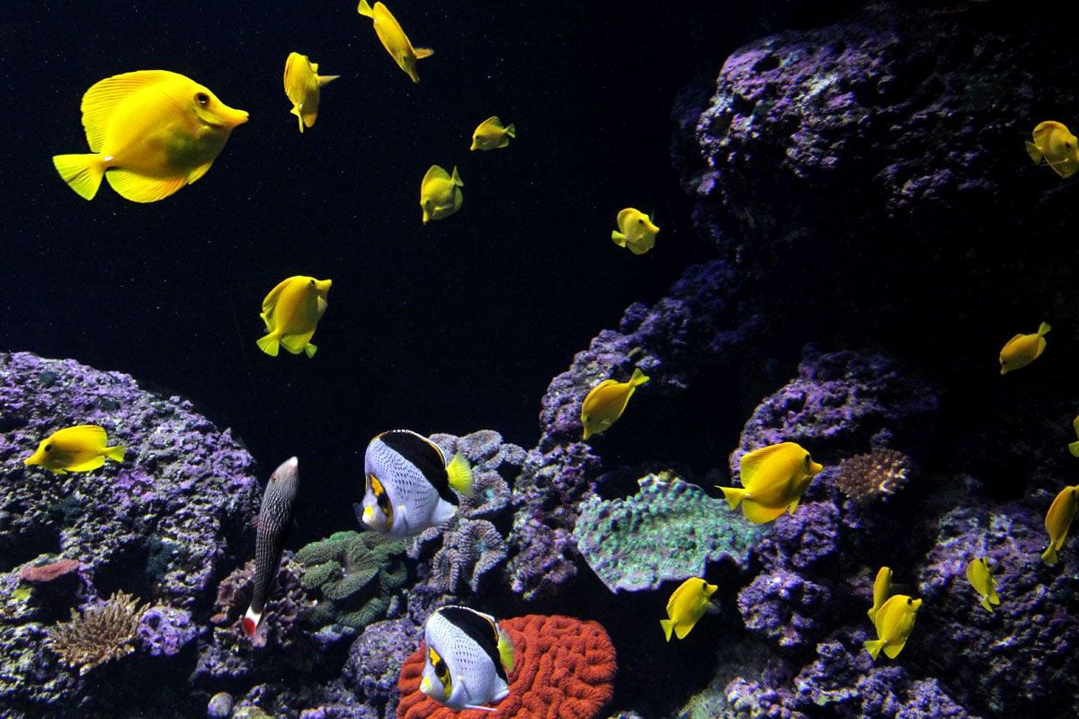 S.E.A. Aquarium, Resorts World Sentosa, Singapore