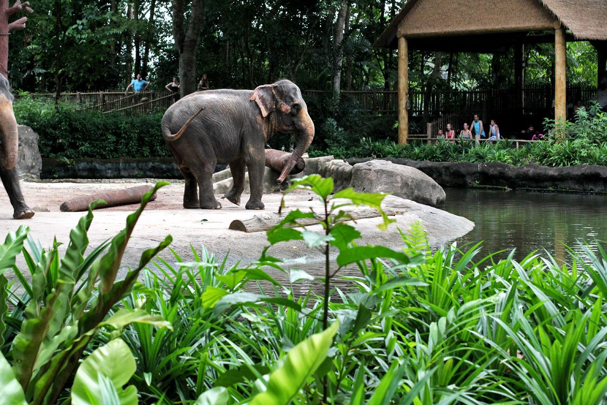 Visit Singapore Zoo, One of the World's Best Zoos According to TripAdvisor