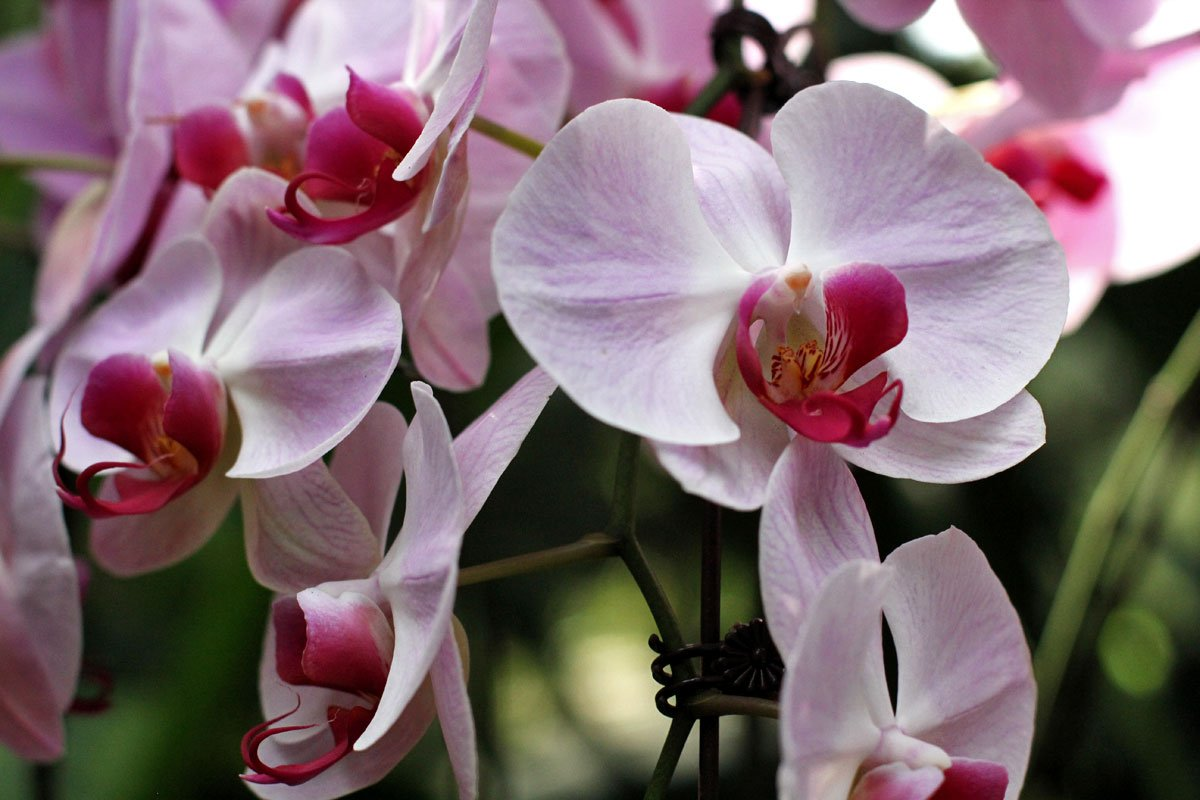 See the World's Biggest Display of Orchids at the National Orchid Garden in Singapore