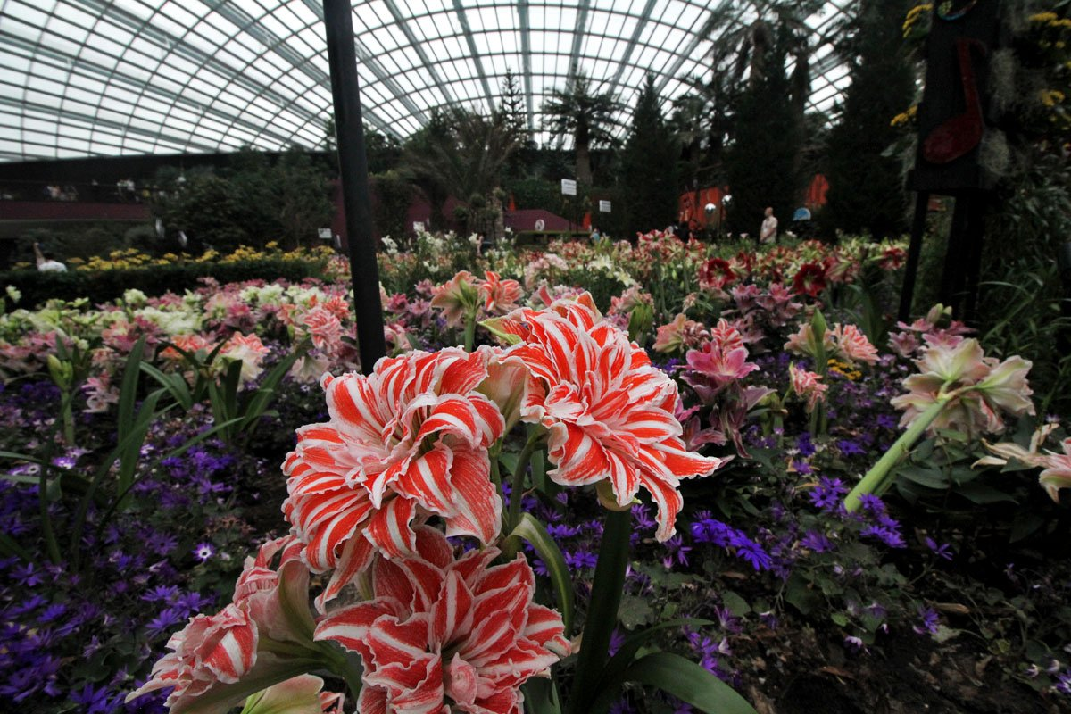 Flower Dome, Gardens by the Bay, Singapore