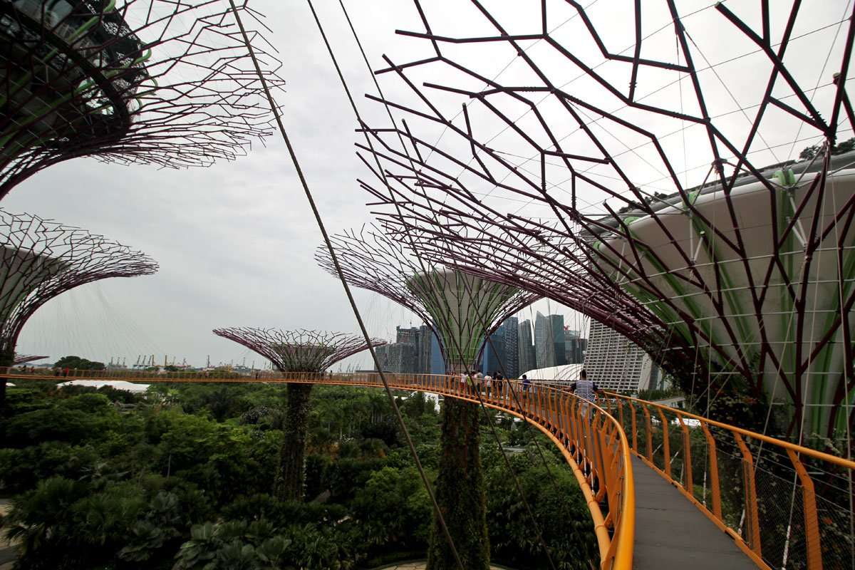 Supertree Grove A Perfect Balance Between Nature And Technology At Garden By The Bay Adult Gardens Singapore