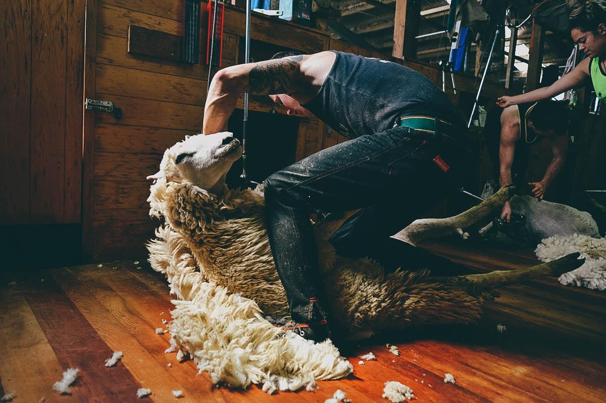 NATIONAL DISH QUEST:  New Zealand Lamb