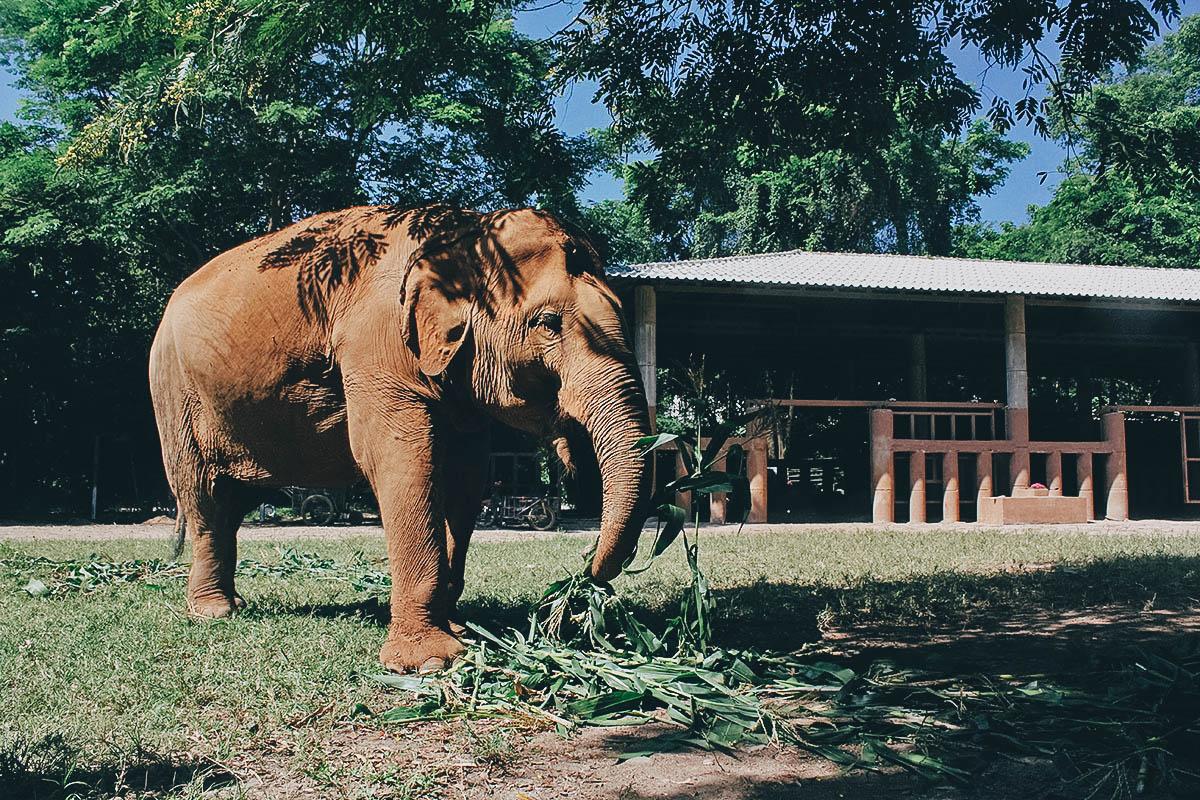 Elephant Nature Park, Chiang Mai, Thailand