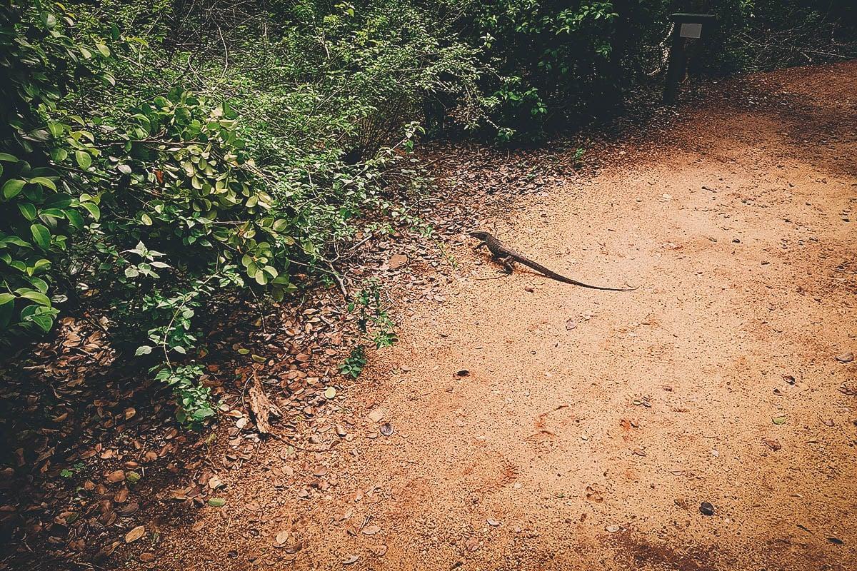 Cinnamon Wild, Tissamaharama, Hambantota, Sri Lanka