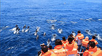 Meet the Whales and Dolphins in Hualien