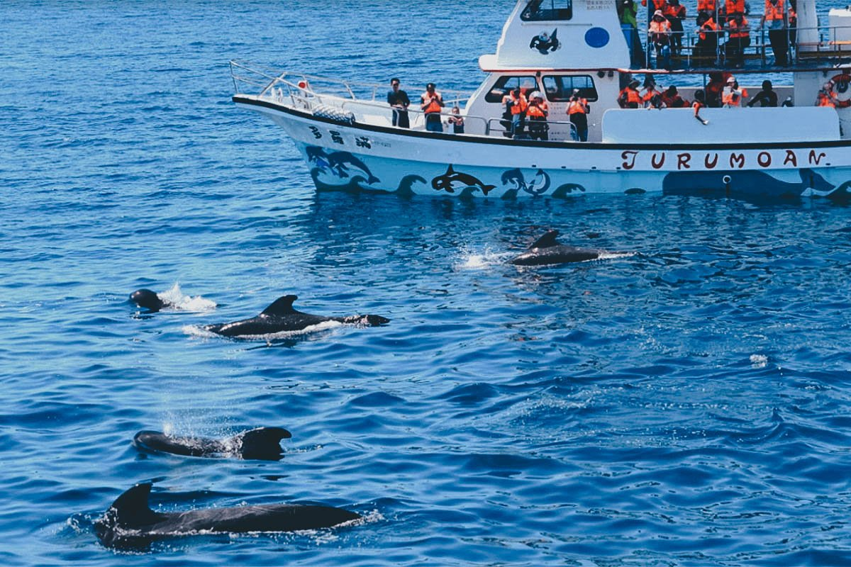 Dolphin and Whale Watching, Hualien, Taiwan