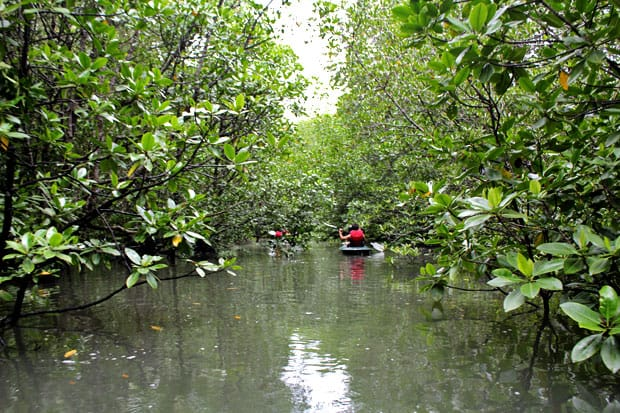 Dev's Adventure Tours Triathlon (PART III): Mangrove Kayaking in Langkawi, Malaysia