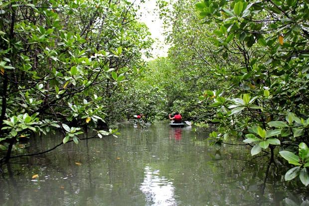 Dev's Adventure Tours Triathlon (PART III):  Mangrove Kayaking in Langkawi, Malaysia
