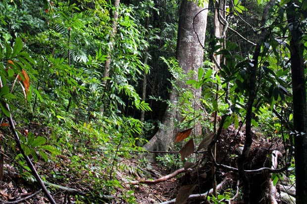 Dev's Adventure Tours Triathlon (PART II):  Jungle Trekking in Langkawi, Malaysia