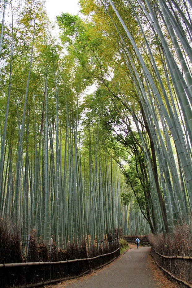 Arashiyama Bamboo Groves: A Stroll through another World in Kyoto, Japan