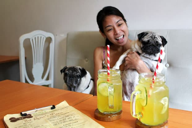 Sunday Brunch at Whole Pet Kitchen, the Country's First Pet Deli & Bark-ery!