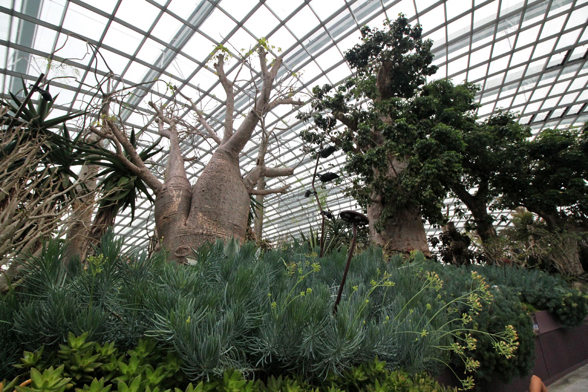 Explore the Gardens of the Future at Flower Dome, Gardens by the Bay, Singapore
