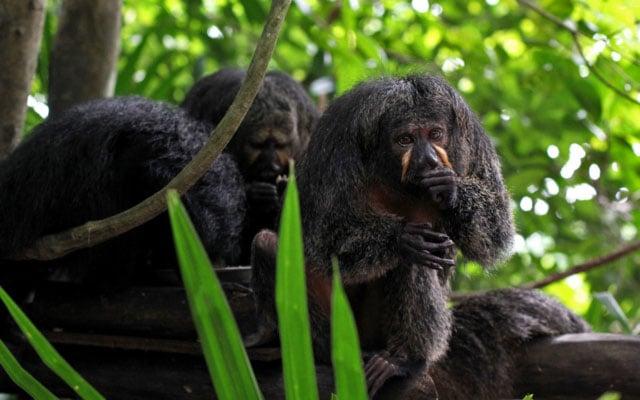 Visit Singapore Zoo, One of the World's Best Zoos According to TripAdvisor