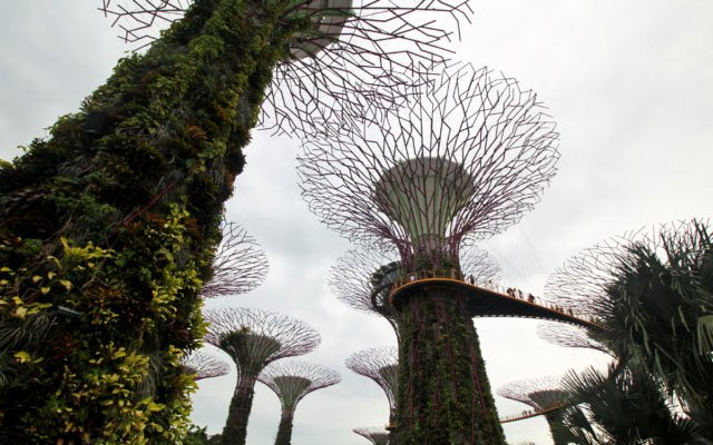 Supertree Grove: A Perfect Balance Between Nature and Technology at Gardens by the Bay in Singapore