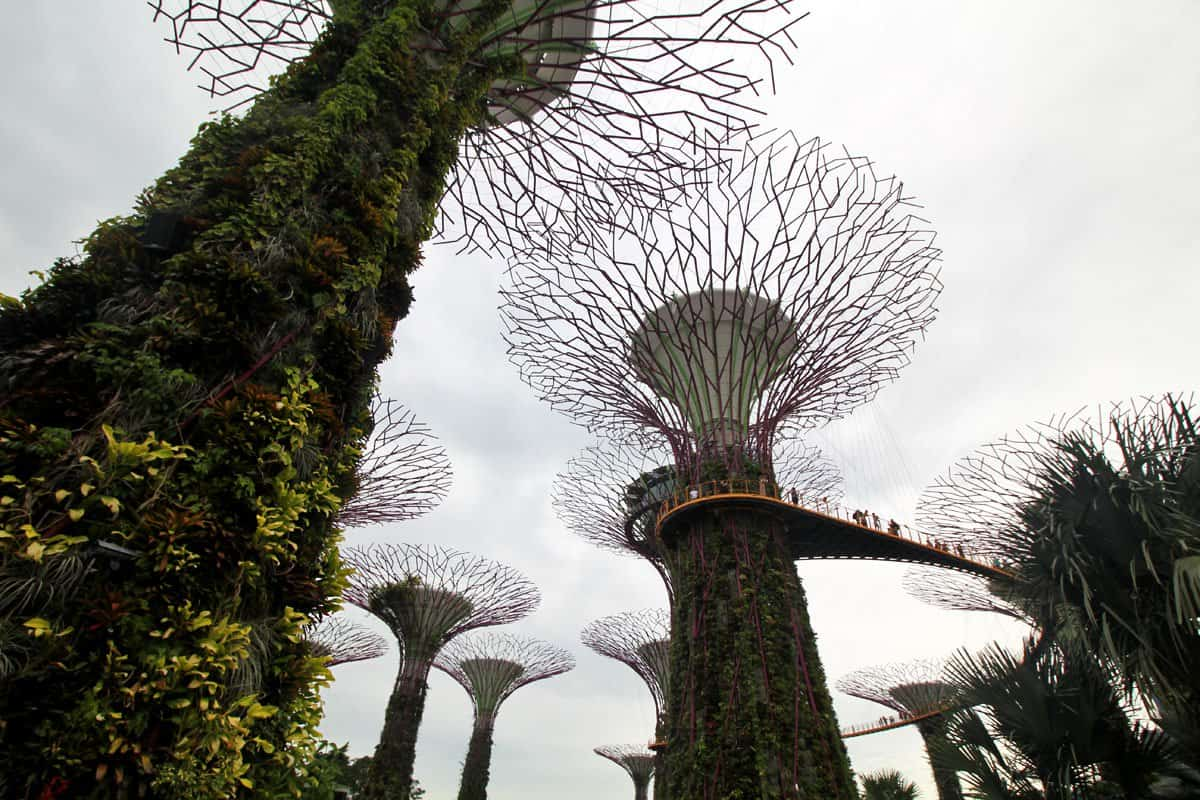 Get Super Funky at Supertree Grove, Gardens by the Bay, Singapore