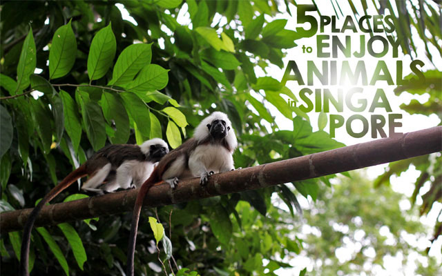 5 Places to Enjoy Animals in Singapore