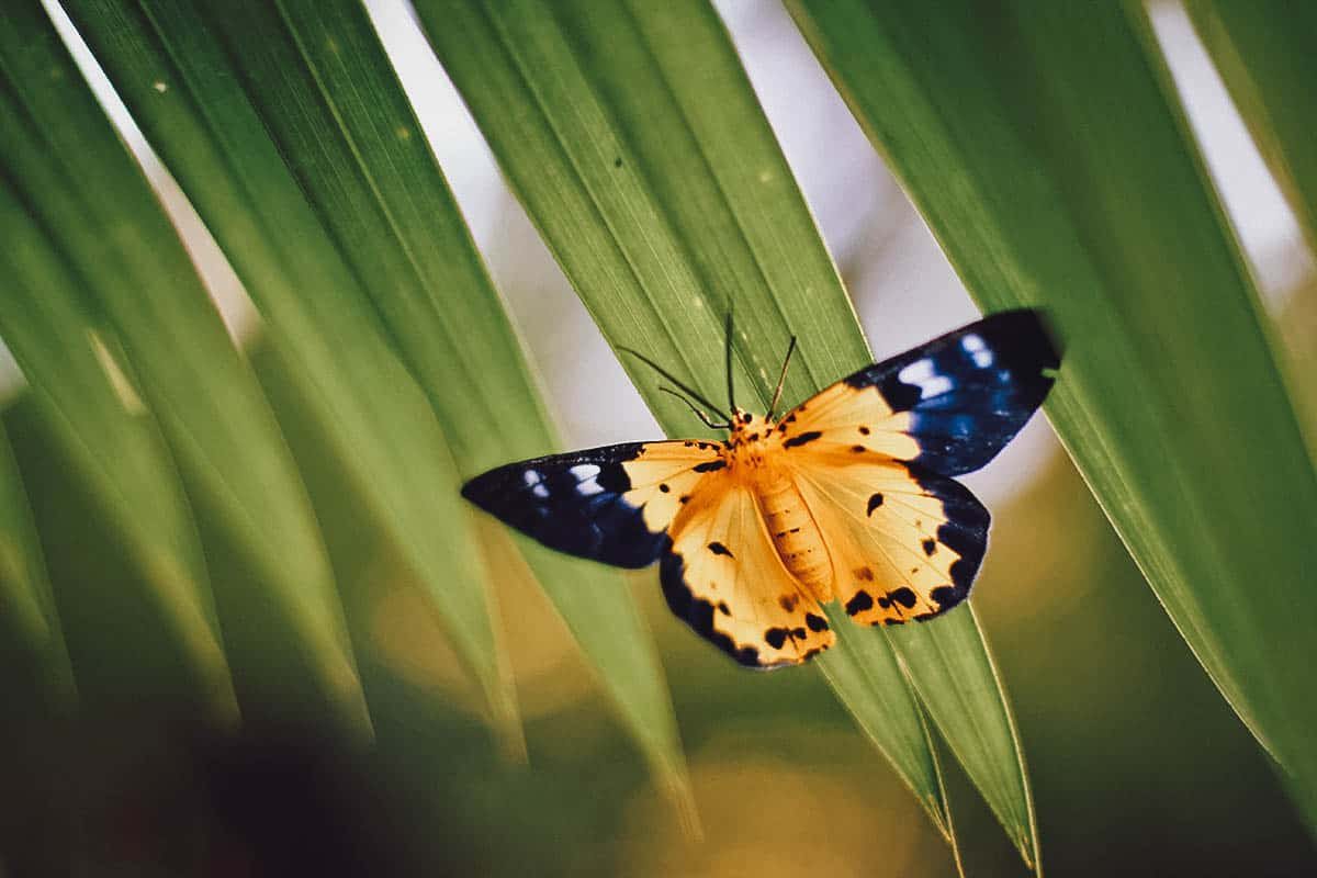 Yellow butterfly on leaves