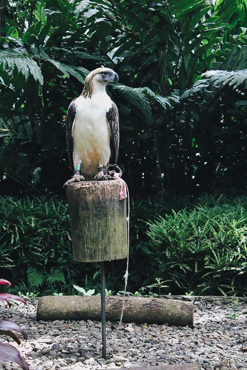 Philippine Eagle Center, Davao