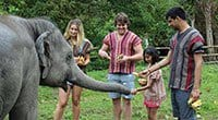 Chiang Mai Elephant Jungle Sanctuary Experience