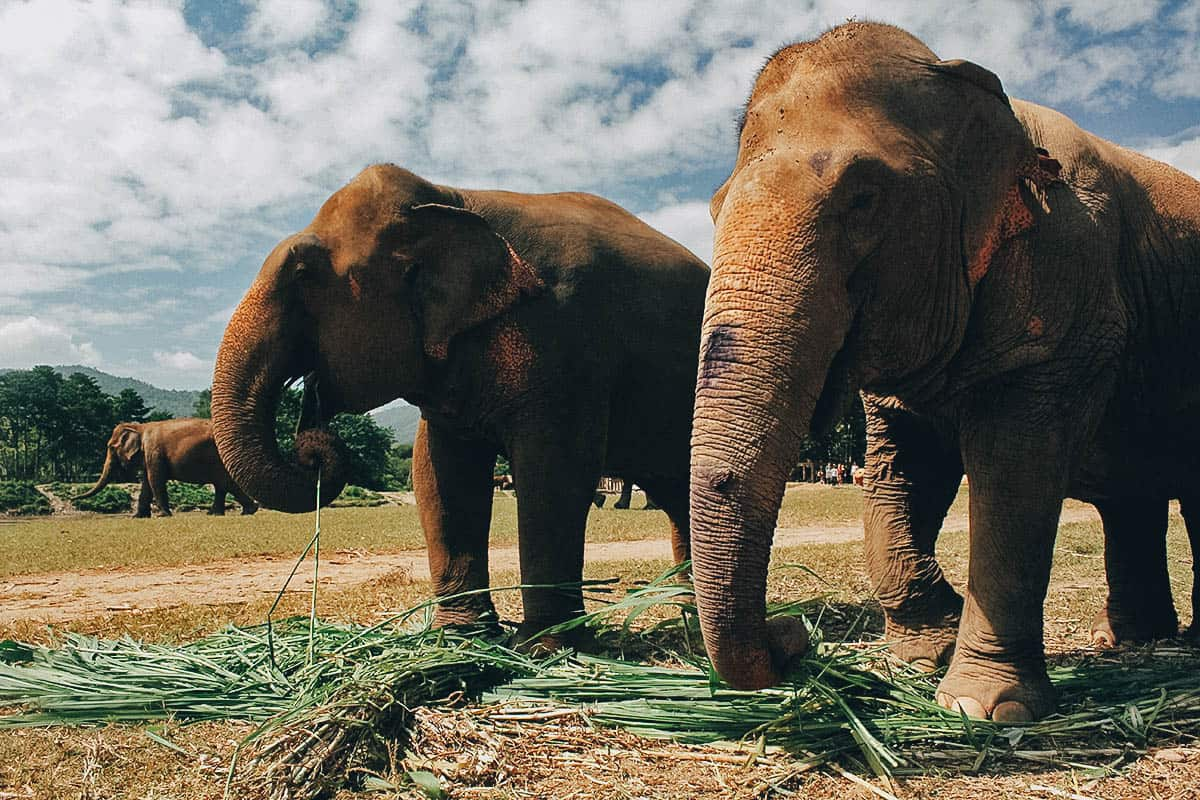 Elephant Nature Park: A True Animal Sanctuary in Chiang Mai, Thailand