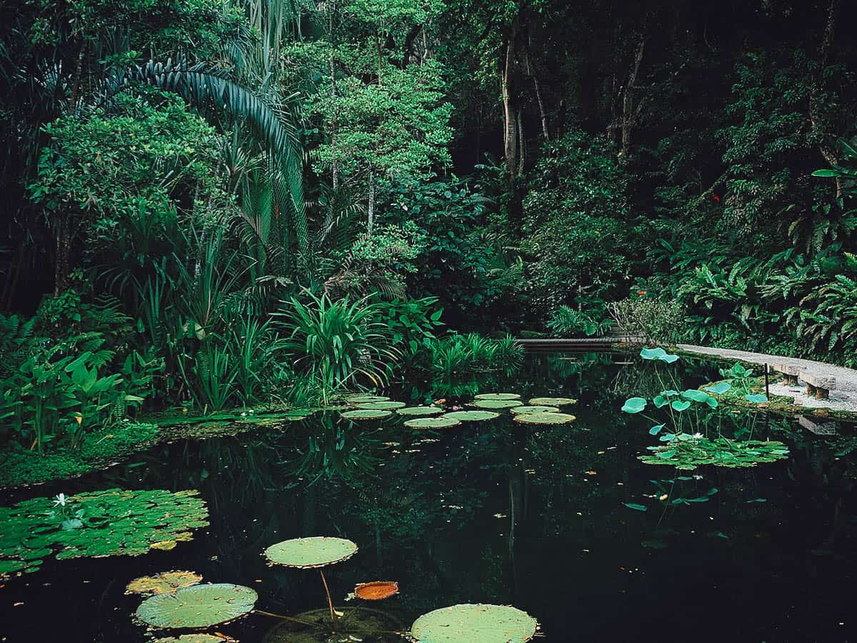 Pond at the Tropical Spice Garden in Penang, Malaysia
