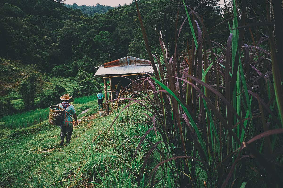 Pai Karen Village Foraging Adventure: A Once-In-A-Lifetime Experience with A Chef's Tour in Northern Thailand