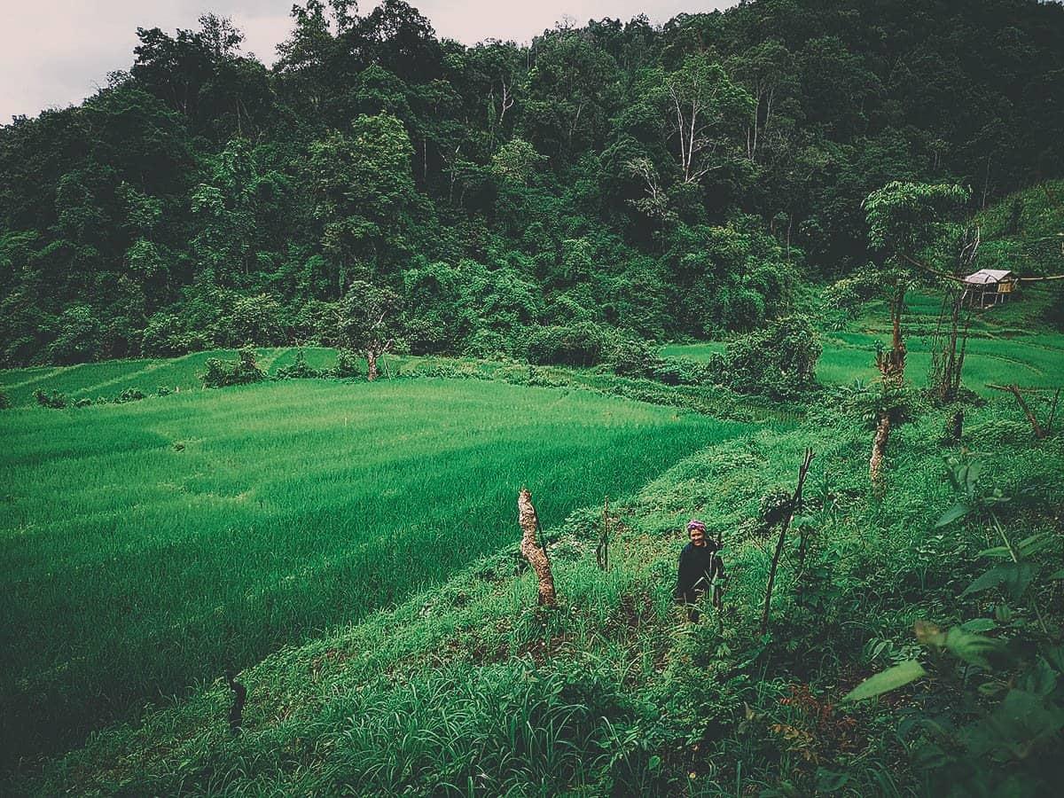 Pai Karen Village Foraging Adventure, Chiang Mai, Thailand
