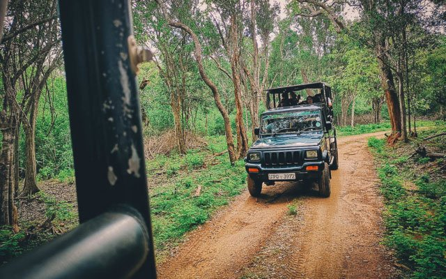 Yala National Park Safari: The Best Place to See the Elusive Leopard in Sri Lanka