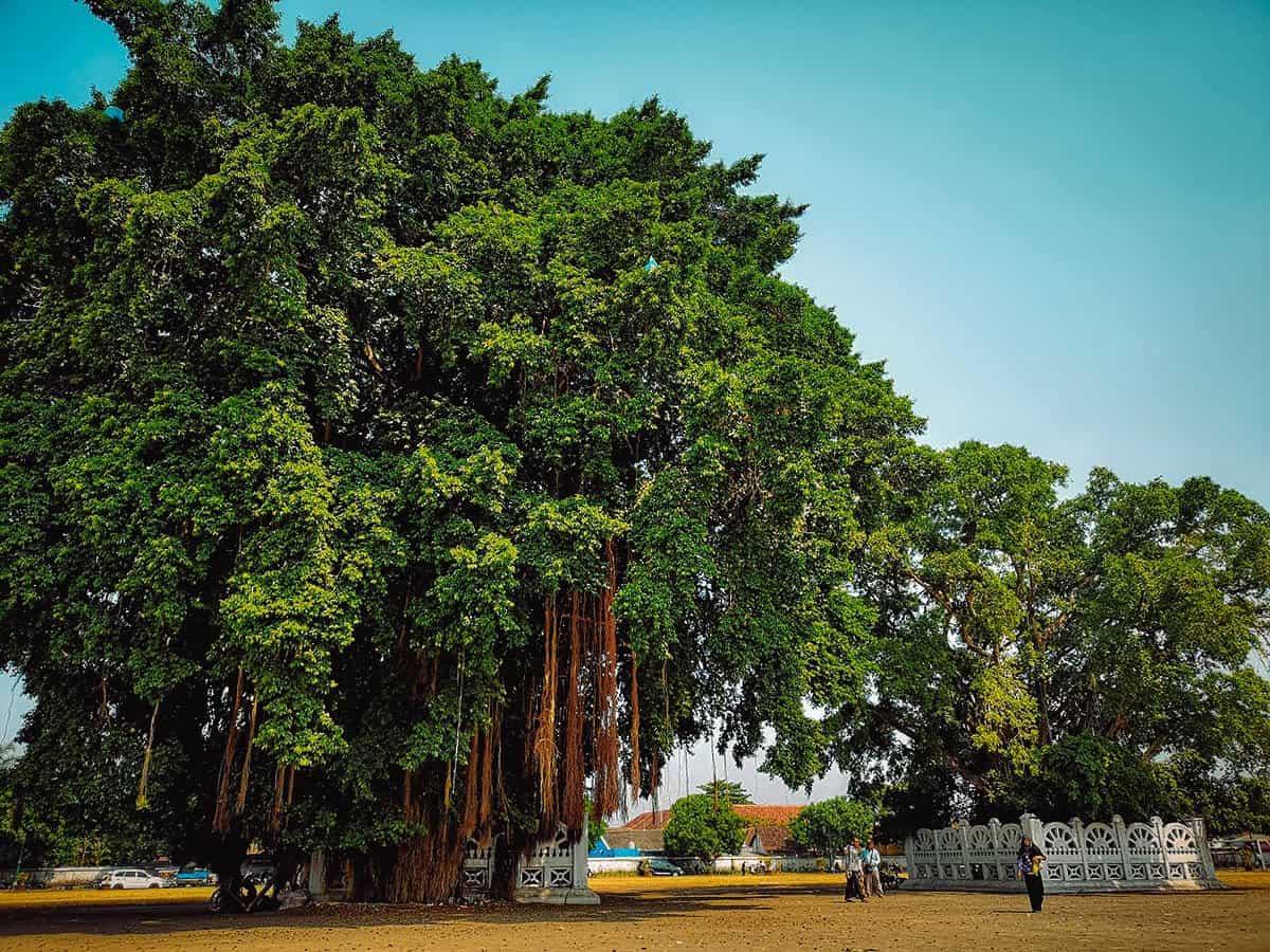 Alun-Alun, Yogyakarta, Indonesia