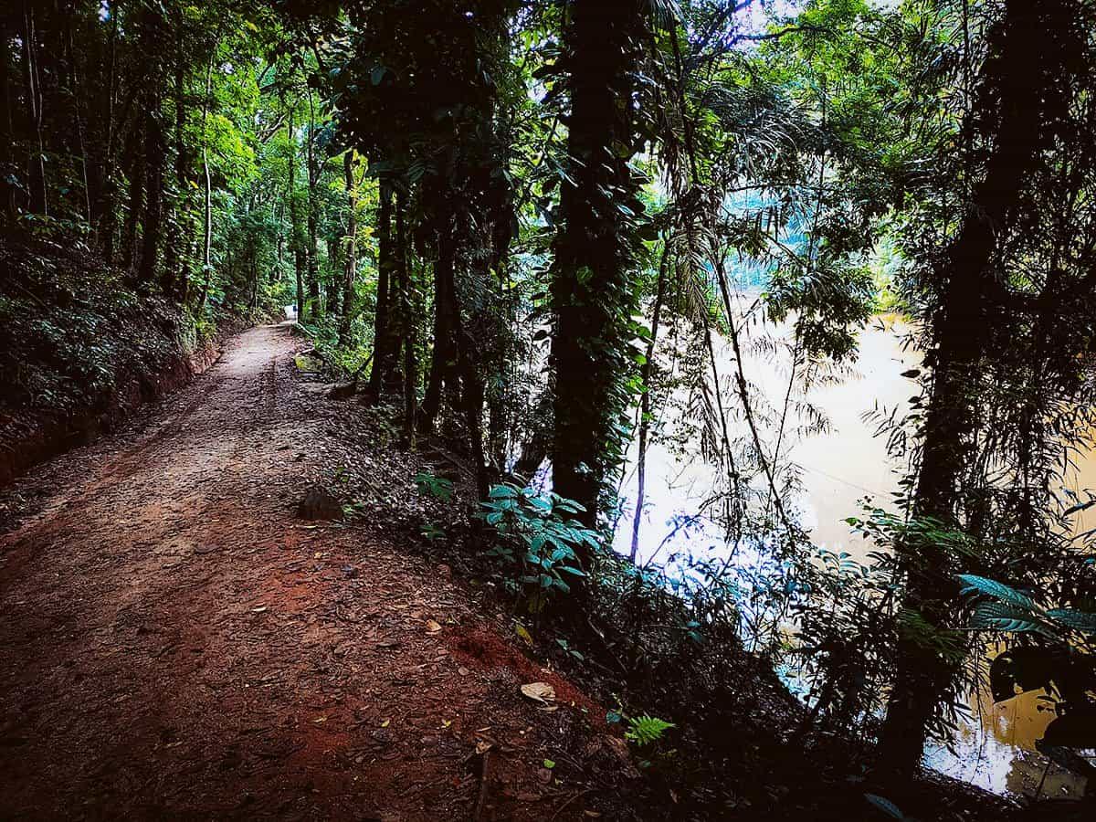 Udawattakele Forest Reserve, Kandy, Sri Lanka