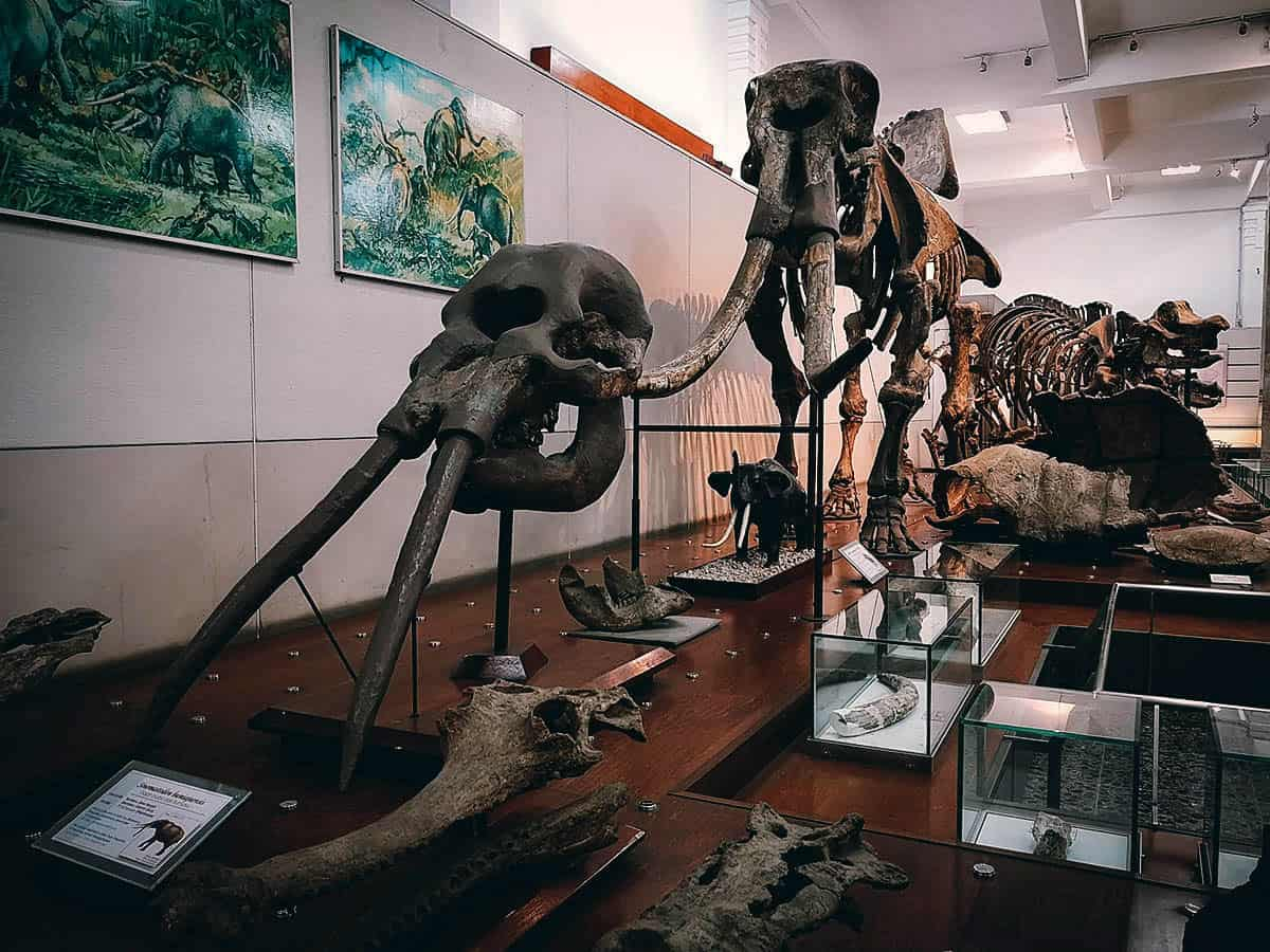 Geological Museum, Bandung, Indonesia