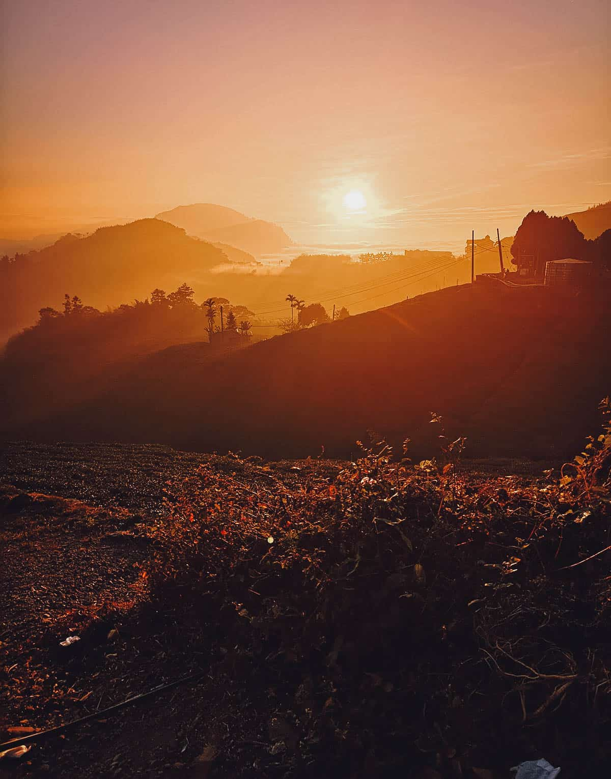 Sunset at Alishan National Scenic Area, Chiayi County, Taiwan