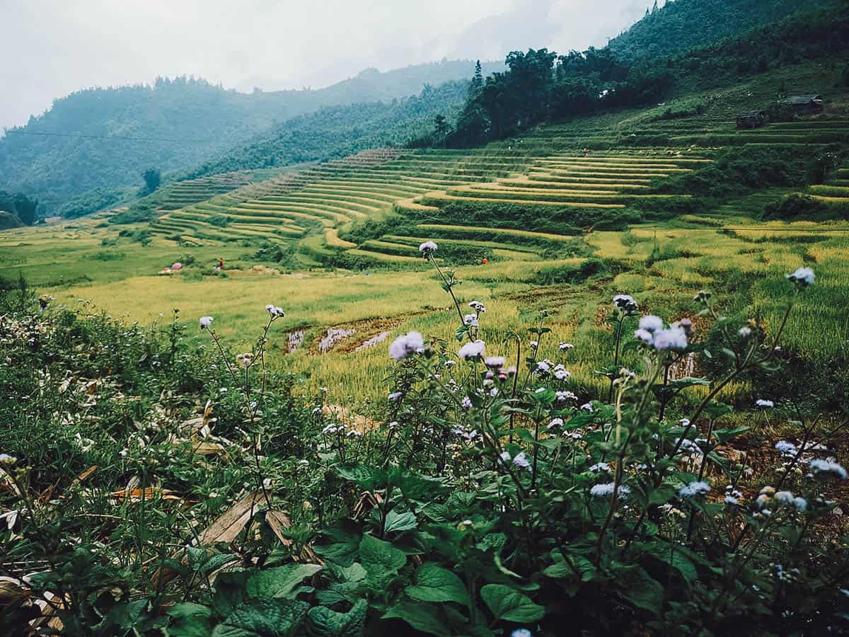 Hills and rice terraces in Sapa, Vietnam