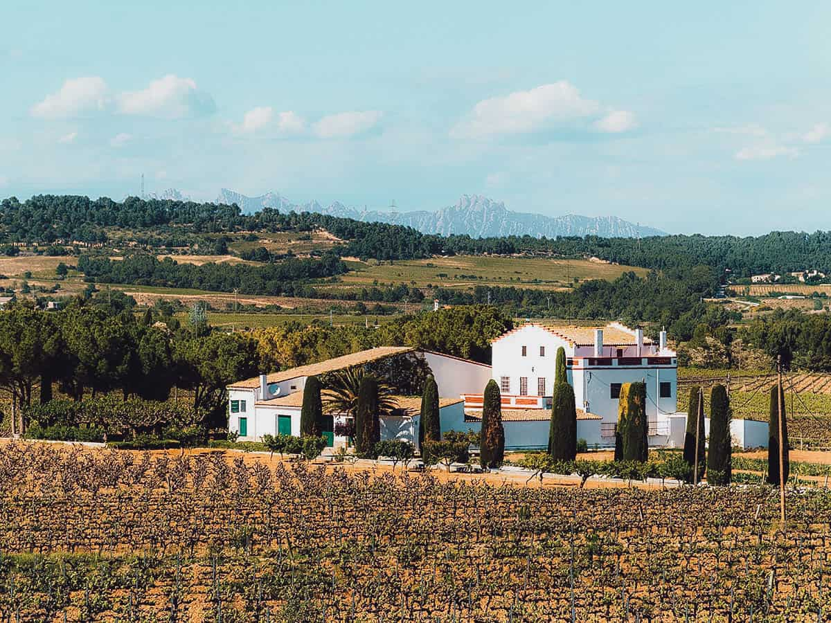 Vineyards and winery in Penedes
