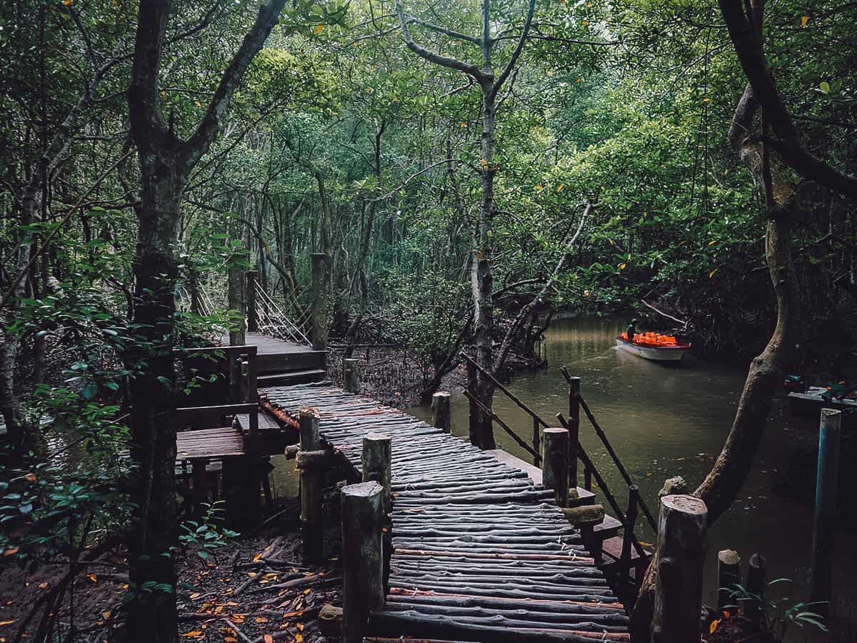 Wooden bridge at Can Gio, Vietnam