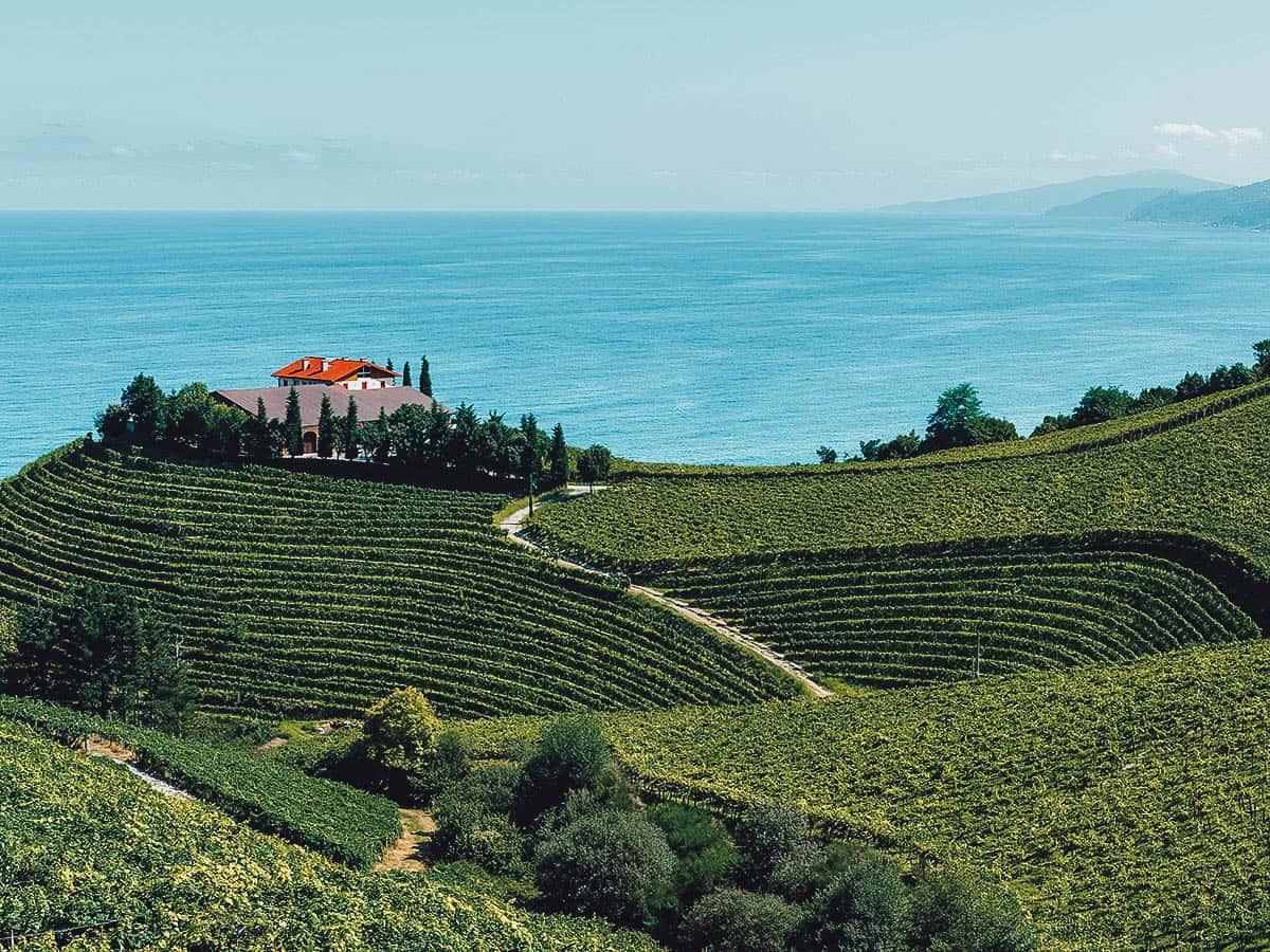 Vineyard in Getaria