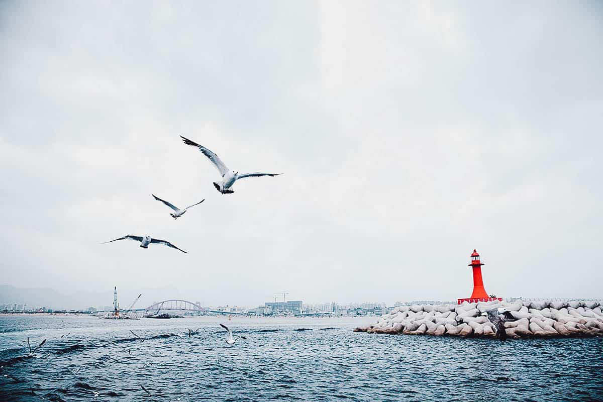 Red lighthouse with seagulls