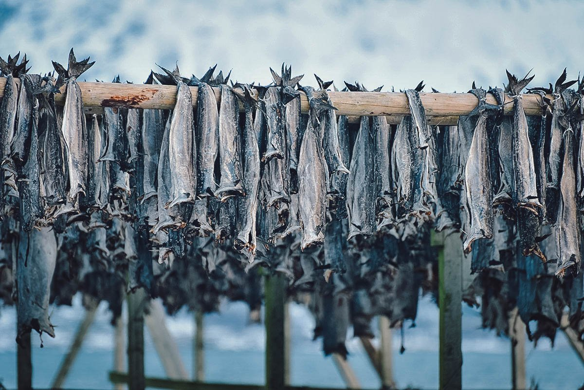 Tørrfisk hanging to dry